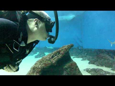 Sharks in Hawaii - Scuba diving in a shark tank