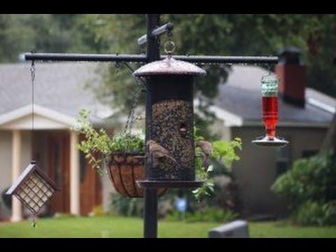 Best Squirrel Proof Bird Feeder Pole and Baffle System ...