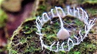 Spiders BUILD Weird Mysterious Silk Structures !