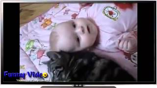 Funny Videos  Funny Cats   Funny Baby   Funny Cat Videos   Funny Babies Videos   Funny Animals