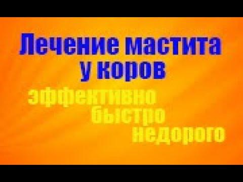 ЛЕЧЕНИЕ МАСТИТА. Надвыменная блокада. Treatment of mastitis. Novocaine blockade. - iqiyivideo.com