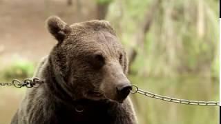 trick or bear