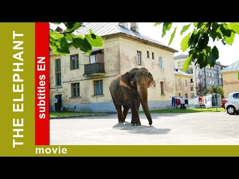 The Elephant. Russian Movie. Adventure. Comedy. English Subtitles. The Rock Films. StarMediaEN