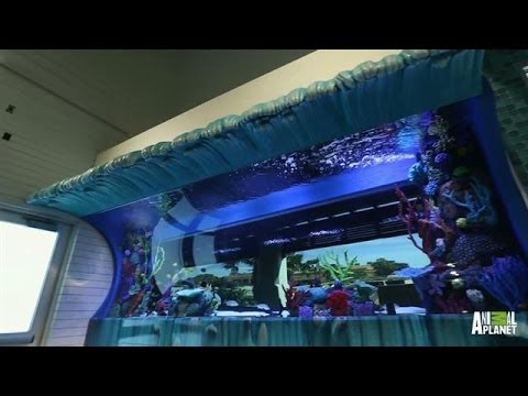 Reveal: An Inside-Outside Surf-Themed Tank | Tanked - YouTube