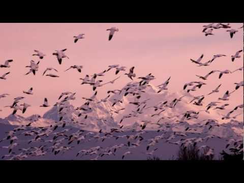 Japser Forks - River Flows In You (Klass Radio Mix)