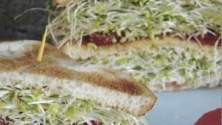 Alimentos que curan: Anemia,  Alfalfa.