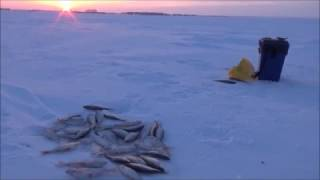 рыбалка в завьяловском районе алтайского края