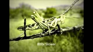 download lagu Crickets Chirping Slowed Down 800% Creepy gratis