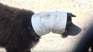 Dog's Head Gets Stuck In A Pipe For Months | Animal in Crisis EP14