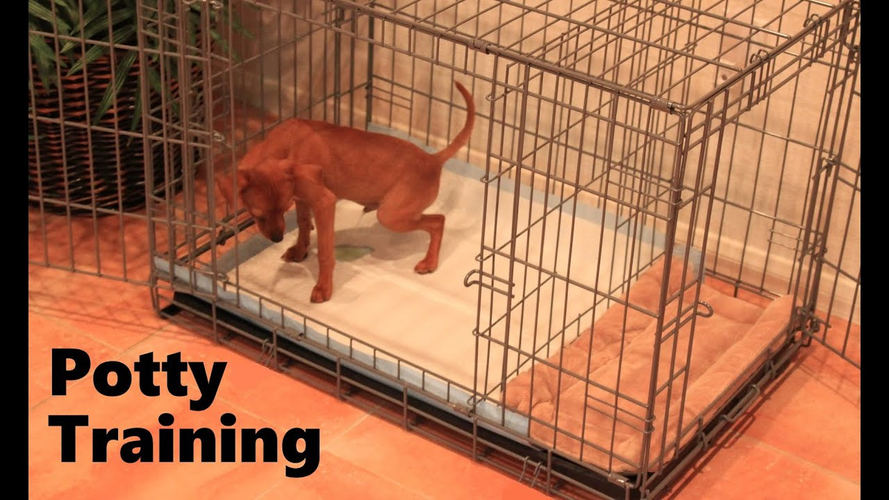 Potty Training Puppy Apartment Official Full Video How