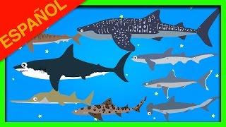 Tiburones para Niños | Aprender los nombres de los tiburones | Tiburon: Animales Acuaticos