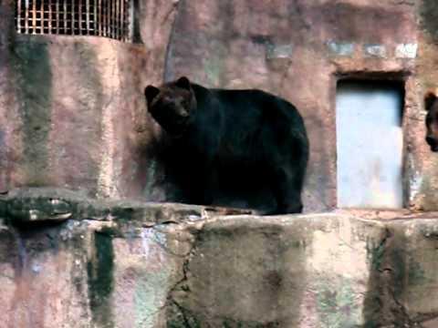 浜松市動物園のヒグマ