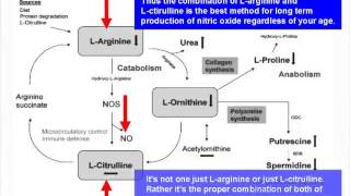 The Truth About L-Arginine