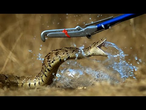 Breathtaking! Slow Motion Puff Adder Attack - Deadly 60 - Series 3 - BBC