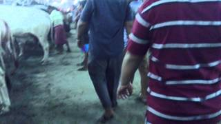 ঢাকার গরুর হাট