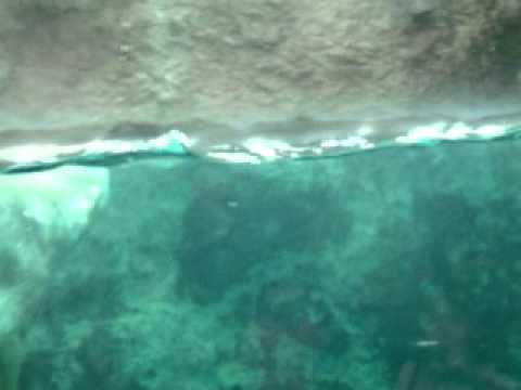 旭山動物園 白くまⅡ