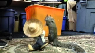 Dead Squirrel Puppet