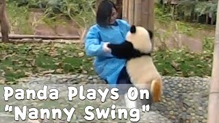 "Panda Cub Plays On ""Nanny Swing"" 