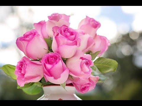 De las rosas y flores mas hermosas preciosa criatura - Rosas rosas hermosas ...