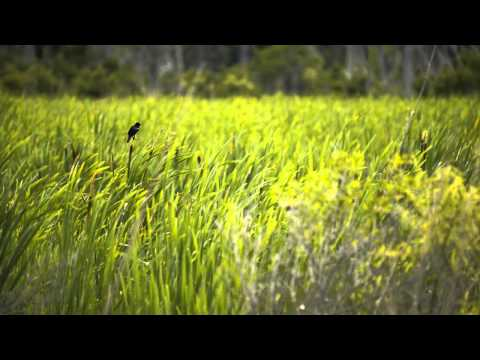 Nikon D800 test video - Swamp