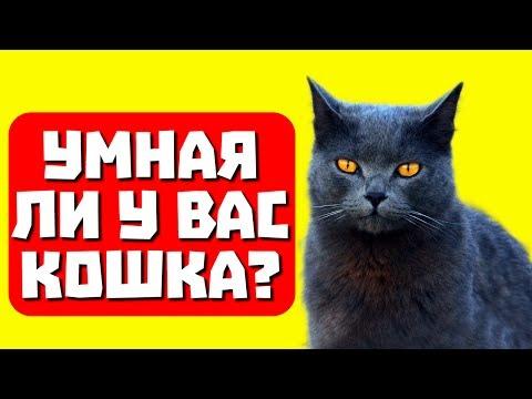 Умная ли у вас кошка? Тест с прикольным котом Джемом! 🐈