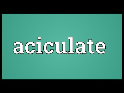Header of aciculate