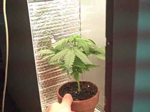 Hydro Indoor Auto Grow System Hydroponic Basil Grow