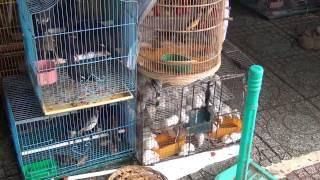 Chợ bán chim, chó, mèo ở Sài Gòn- Reported by Pham Khanh 2012
