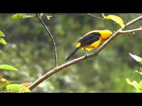 Colombia birds and wild life