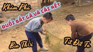 Bin Tít | Anh Em Siêu Quậy Tập 7 : Đuổi Bắt Gà Và Cái Kết | Wow Kid TV