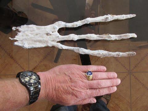 Strange Alien Hand Found On The Coast Of Peru