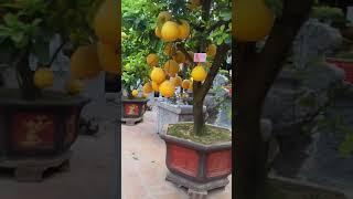 Họp mặt đâu xuân 2018 tại nhà thờ họ Trịnh Giữ Hải Phòng