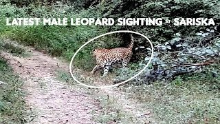 Sariska Leopard Sighting - Close Encounter October 2018