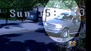 Stray Dogs Chase Bicyclist Into Pickup Truck