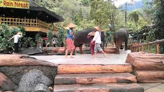 download lagu Taman Safari Indonesia Elephant Show1 gratis