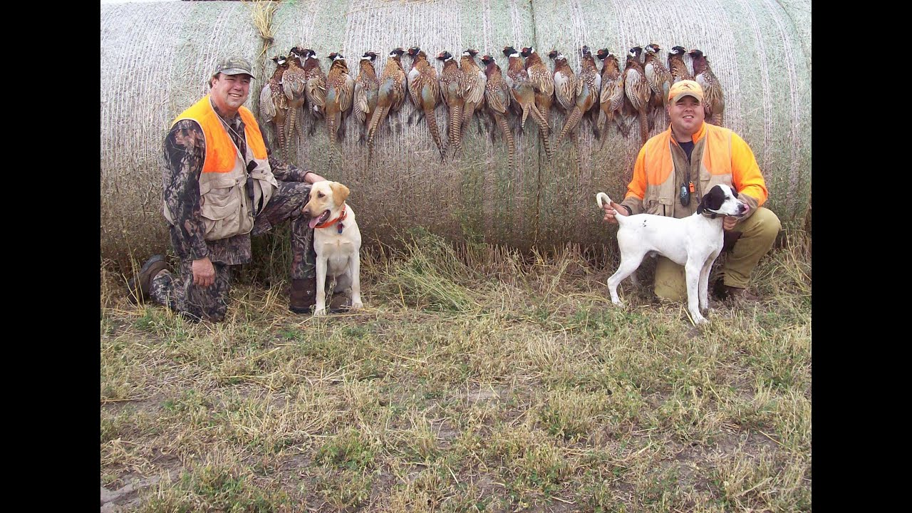 South dakota pheasant hunting with whiteoak outfitters for South dakota out of state fishing license