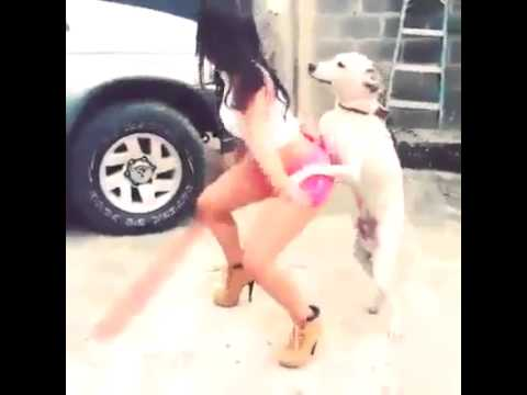 Horny dog dancing with a sexy woman :DDD thumbnail