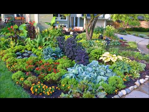 Vegetable garden Potager design Ideas