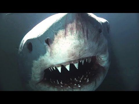 Natural Born Killers - The Science of Shark Attacks