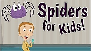Spiders for Kids | Educational Science Videos
