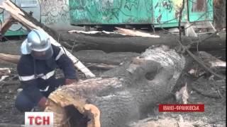 Негода залишила Івано-Франківськ без головної ялинки