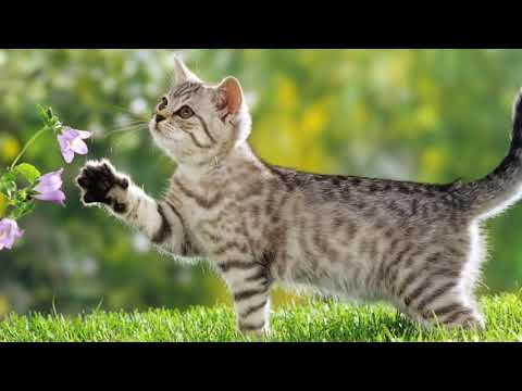 14 Интересни факта за котките