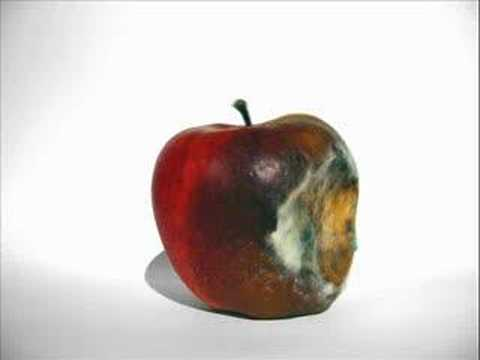 Rotting Apple (Mould)
