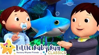 Original Baby Shark Dance | Little Baby Bum | Baby Songs and Kids Cartoons