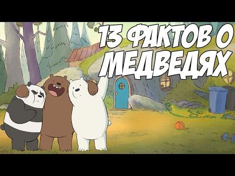 ВСЯ ПРАВДА О МЕДВЕДЯХ - 13 КЛЁВЫХ ФАКТОВ (WE BARE BEARS)