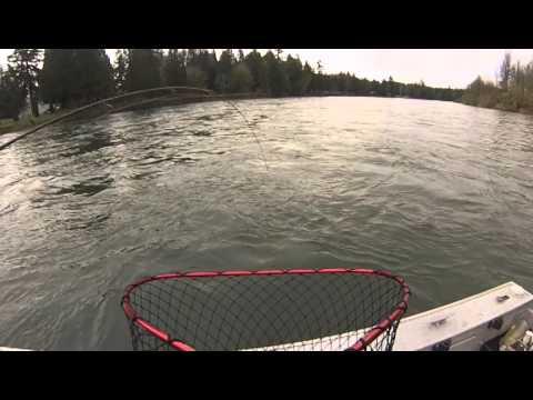 2014 Spring salmon on the Cowlitz!  www.salmoncommander.net