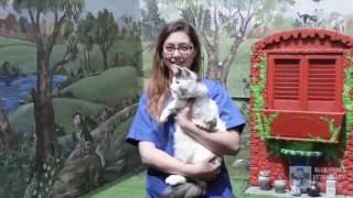 Blue Cross Veterinary Hospital - Signal Hill, CA