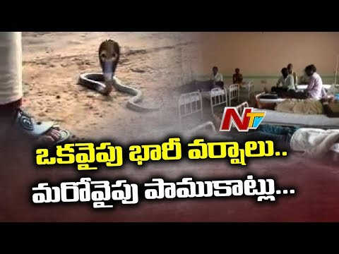 Snake Bite Injures 22 Farmers in Avanigadda | Krishna District | NTV