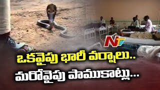 Snake Bite Injures 22 Famers in Avanigadda | Krishna District | NTV