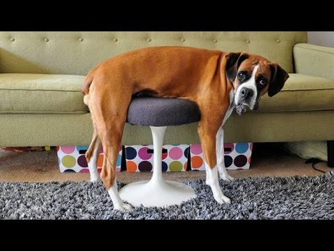 You Can't Resist Laughing While Watching Animals - Funny Animal Compilation
